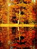 Automne en forêt de Compiegne
