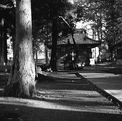 In shrine grove