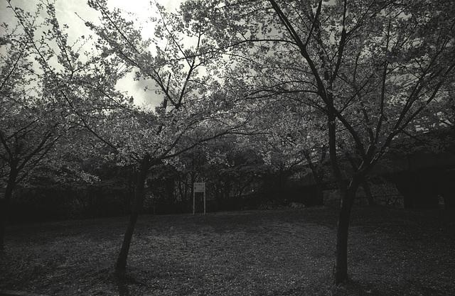 sakuranomiya-16