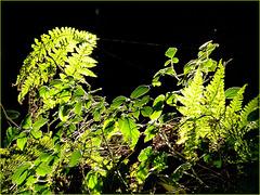 Juste un trait de lumière à travers la forêt.. Just a ray of light through the forest..