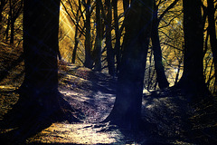 my own magic forest...........