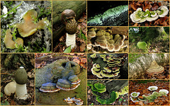 Beleef de Natuur... III: Also time for some green mushrooms / fungi from the Netherlands...