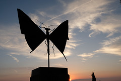 Tourtour papillon contre jour DSCF8378