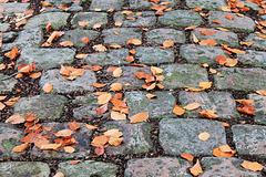 Chute d'automne sur vieux pavés