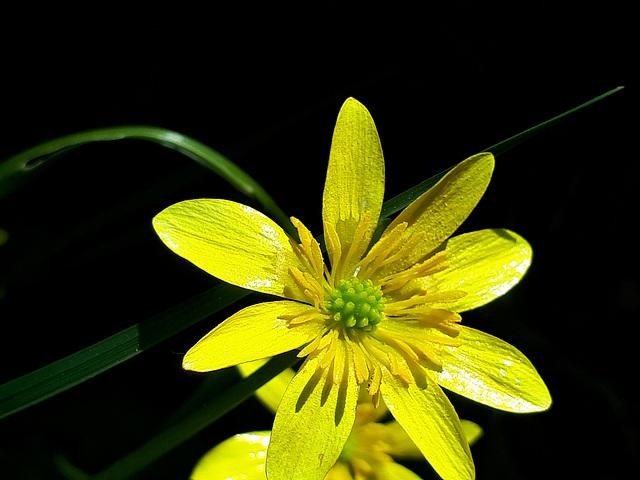 Une fleur jaune