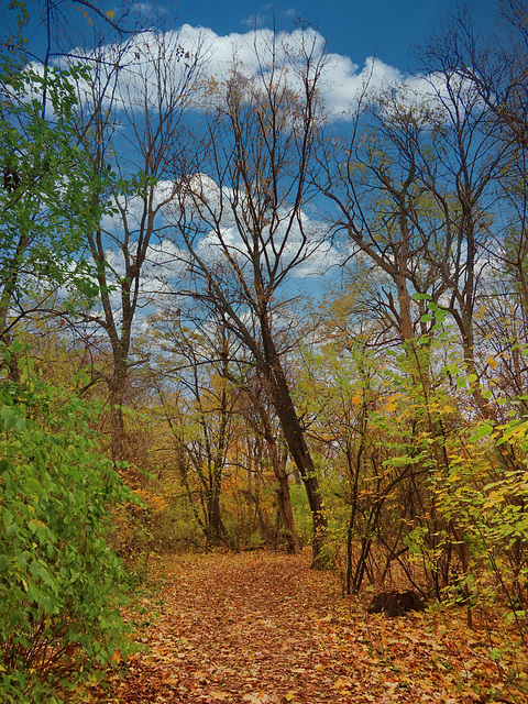 1 (24)..austria autumn forest wald