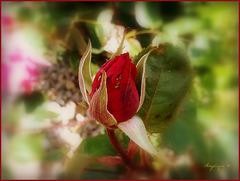 *Qui veut cueillir des roses ne doit pas craindre les épines.