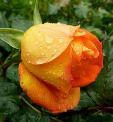 Sous la pluie / Under the rain