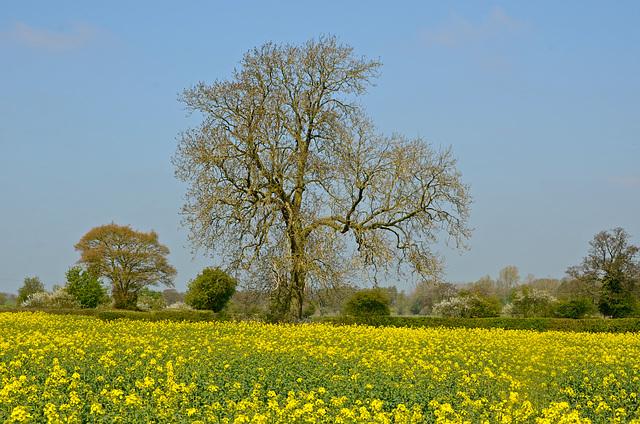 Fields near Gnosall
