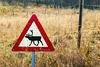 Beware of reindeer (PiP)