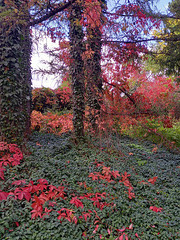 Herbstsweg