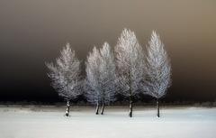 arbres en gel
