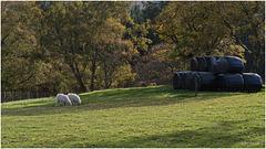 A Welsh Scene.
