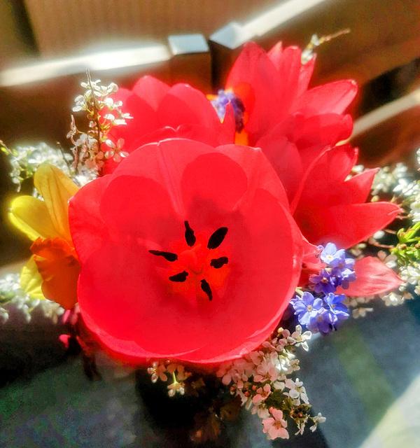 Tulpen im Sonnenlicht