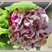 Soyons reconnaissants aux personnes qui nous donnent du bonheur ; elles sont les charmants jardiniers par qui nos âmes sont fleuries », Marcel Proust