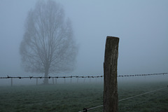 HFFF! Happy foggy fence friday !