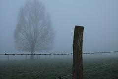 HFFF! Happy foggy fence friday !