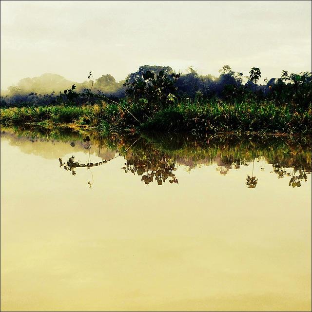 A soft amazonian morning.