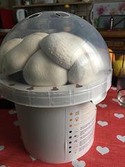 Serre a champignons