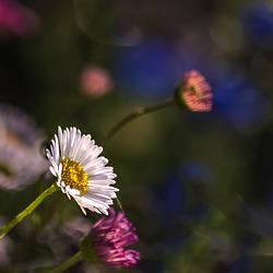 Con la llegada de la primavera