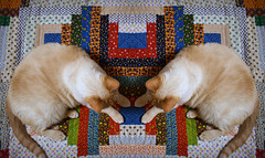 Calico Rectangles and the Mirrored Cat...