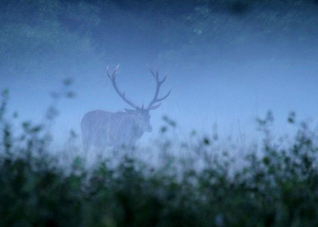 une silhouette dans la brume du matin  ......
