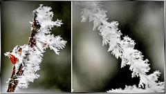 Eiskristalle. Ice crystals. ©UdoSm