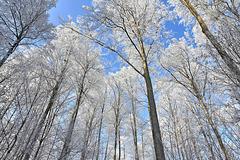 Winterwald zwischen Zundelbacher Linde und Rösslerweiher