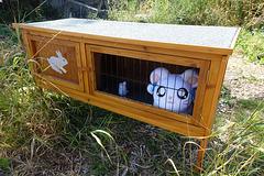 happy caged animals