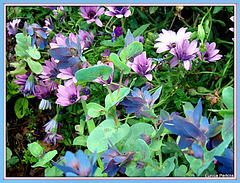 Botanical Beauties.