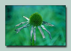 Mein kleiner grüner Kaktus... ;)