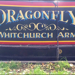 Dragonfly - Whitchurch Arm