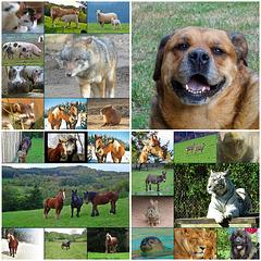 ♥ Journée Mondiale des Animaux ♥ [ON EXPLORE]