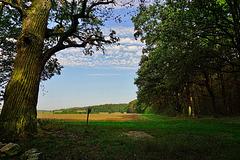 Bei der Eulen-Eiche  -  By the Owl-Oak Tree