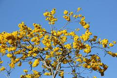 258/365 Spring Yellow