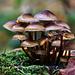 Geheimnisvolle Pilzwelt - Mysterious world of mushrooms