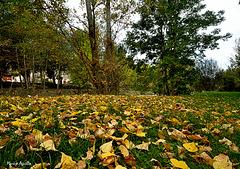 Paseo de otoño