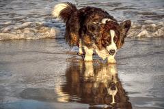 Its true - I am a good looking dog!