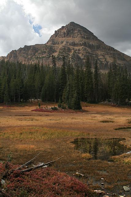 Reid's Meadow