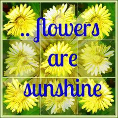 -sunshine