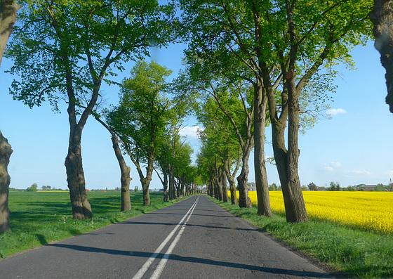 Between Swiebodzin & Babimost Lubusz Poland 11th May 2016