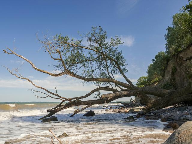 """gefallen - Hindernisse beim """"Strand""""spaziergang"""