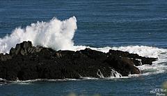Bold Surf