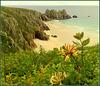 Trereen Dinas (south), Pednvounder beach and honeysuckle, for Pam.