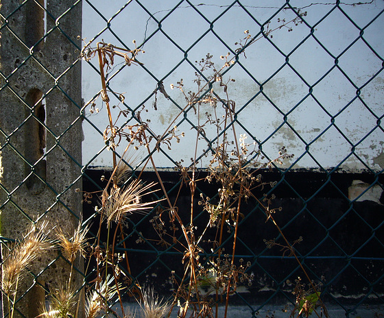 fence and wild grasses - Pip!