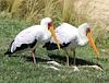 Heure de la sieste, Parc des oiseaux, Villars-les-Dombes (France)