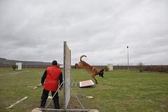CONCOURS CANIN à VERTUS