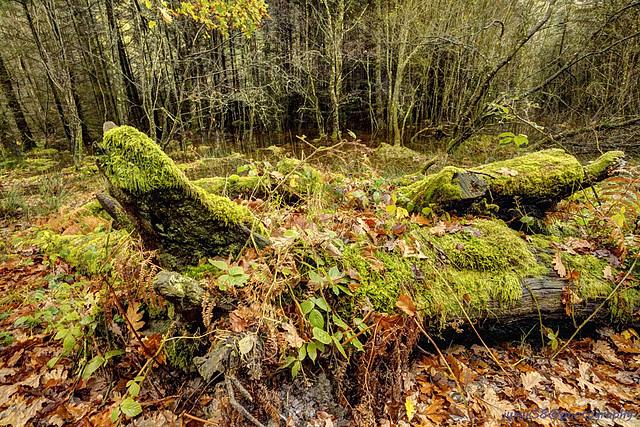 Glendalough 43