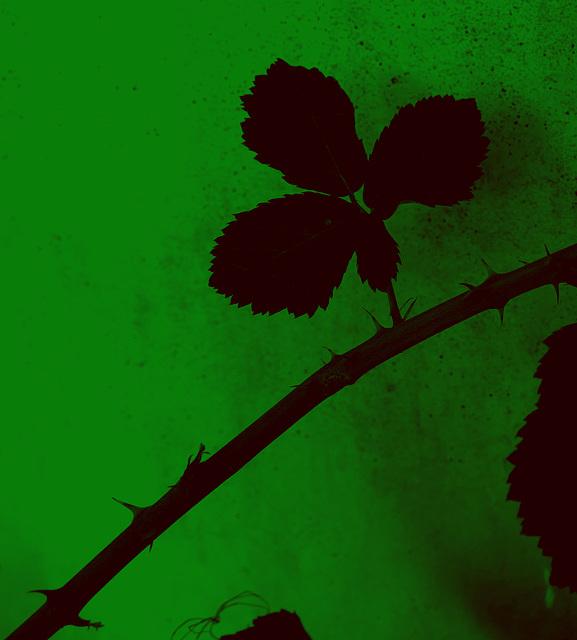 Les ronces, ça pique, mais c'est quand même du vert ...