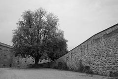 auf der Festung Ehrenbreitstein (© Buelipix)